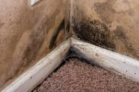 Damp Basement Smell by Dehumidifier For Basement Use A Great Way To Combat Room Dampness