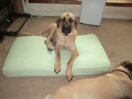 Crib Mattress Dog Bed by Old Crib Mattress Used As A Dog Bed Cheap Mastiff Sized Bed