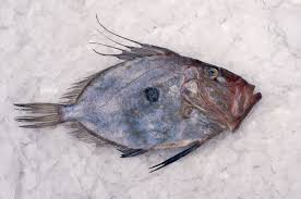 john dory the most unlovely fish you u0027ll ever love
