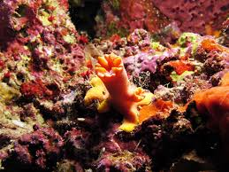 thanksgiving reefs reef cat scans reveal another way acidification speeds erosion