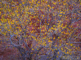 autumn ornaments photograph by tal