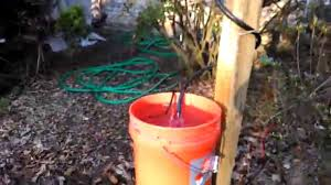 easy water source for bees in the backyard youtube
