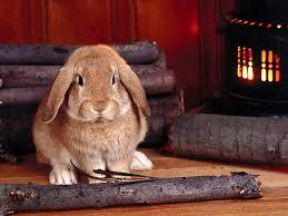 cute easter bunny wallpapers easter rabbit pictures desktop