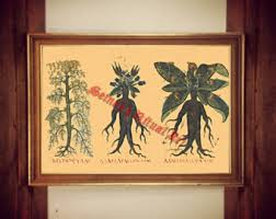 Witch Home Decor Mandrake Art Print Etsy