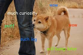 So Doge Meme - understand the doge meme in 7 short steps the barkpost