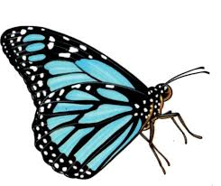 blue monarch butterfly tattoos temporary tattoo black blue clip