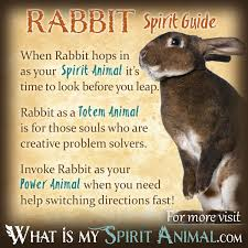 rabbit symbolism u0026 meaning spirit totem u0026 power animal