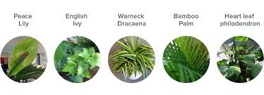 plants that grow in dark rooms green office vs lean office the positive effects of plants in a