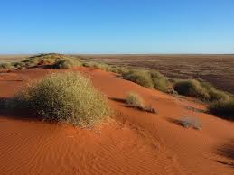 native plants grow on the sand dunes at this beach stock photo simpson desert wikipedia