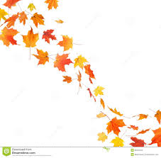 thanksgiving leaves clipart autumn leaf swirl stock images image 35046164