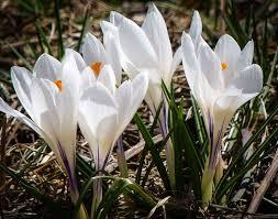 109 best color white garden design images on white