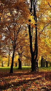 imagenes de otoño para fondo de escritorio otoño fondos de pantalla gratis my hd wallpapers com