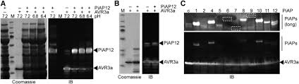 Yu201 I Furniture Import Export The Rxlr Motif Of The Host Targeting Effector Avr3a Of