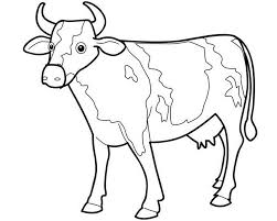 drawn cattle black and white pencil and in color drawn cattle