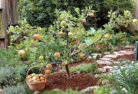 Fruit Garden Ideas Fruit Garden Tropical Fruit Garden Design Alexstand Club