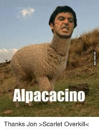Thanks Meme - alpacacino thanks jon scarlet overkill meme on me me