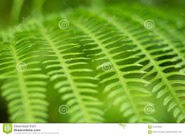 Free Picture Leaf Nature Fern Up Green Fern Leaf Nature Abstract Background Stock Image