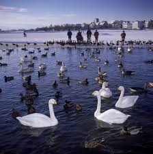 birding iceland travel