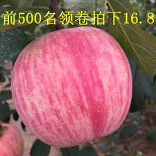bureau vall馥 imprimante bureau vall馥 albi 100 images 15 best georges de la tour images