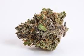cannabis flower pure love marijuana flower 2 1 cbd thc kind love dispensary