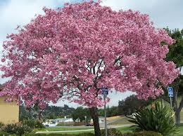 best 25 small ornamental trees ideas on landscaping