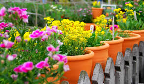 Flowers That Keep Mosquitoes Away 11 Ways To Prevent Mosquitos From Biting You Destination Ksa