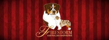 australian shepherd yahoo answers firestorm australian shepherdsfirestorm australian shepherds