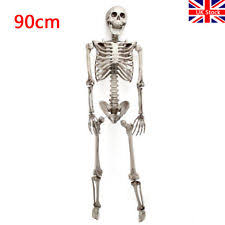 poseable skeleton plastic skeleton party decoration ebay
