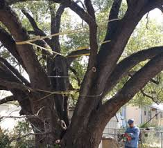 split tree repair prevention brush chipping valley mills tx