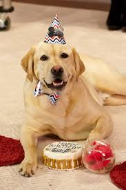 dog birthday party how to throw a stress free dog birthday party