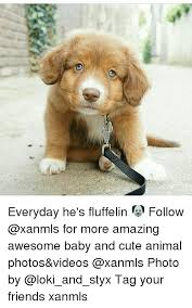 Cute Baby Animal Memes - everyday he s fluffelin follow for more amazing awesome baby