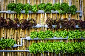 self sustaining garden vertical gardens are the key to self sufficiency in the city