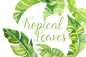 leaf clipart palm leaves pencil and in color leaf clipart palm