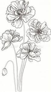 Flower Drawings Black And White - cosmos flowers flowers drawings vector stock vector drawing