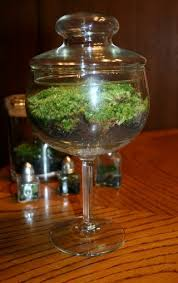 195 best terrarium u0026 table top ideas images on pinterest flower