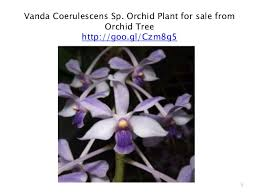 orchid plants for sale orchid plants special products