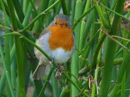 birding for pleasure bangor walled garden in march birds and plants