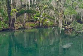 Map Of Florida State Parks by Camping In Florida Florida Hikes