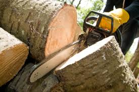 santa tree services llc offers a wide range of tree services