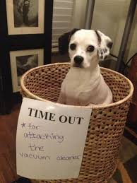 Silly Dog Meme - the 27 naughtiest dogs in the world hilarious dog shaming gallery