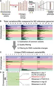 Genome Mapping A Strategy For Direct Mapping And Identification Of Mutations By