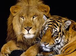 Sri Lanka Flag Lion Enormous Potential For Growth Bangladesh To Sri Lanka Page 4