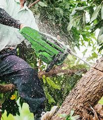 fort wayne tree trimming tree service
