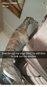 Dog Blinds Mature Cheddar 28m Ago Even Though My Dogs Blind He Still Likes To