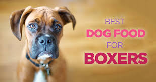 dog food for boxers high protein diet is the key