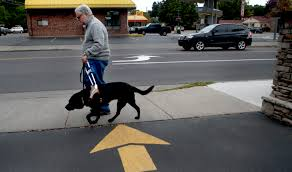 Blind Dog And His Guide Dog Fake Service Animals Cause Problems For The Disabled Business