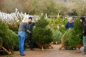 the best places to buy your tree in bristol bristol post