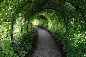 pictures of a garden step inside the world s most dangerous garden if you dare travel