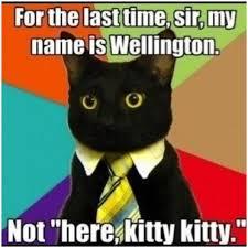 Cat Meme Boat - 17 elegant photos of i should buy a boat cat meme franks wallpaper