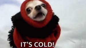 Freezing Meme - memes gifs poke fun at crazy texas weather